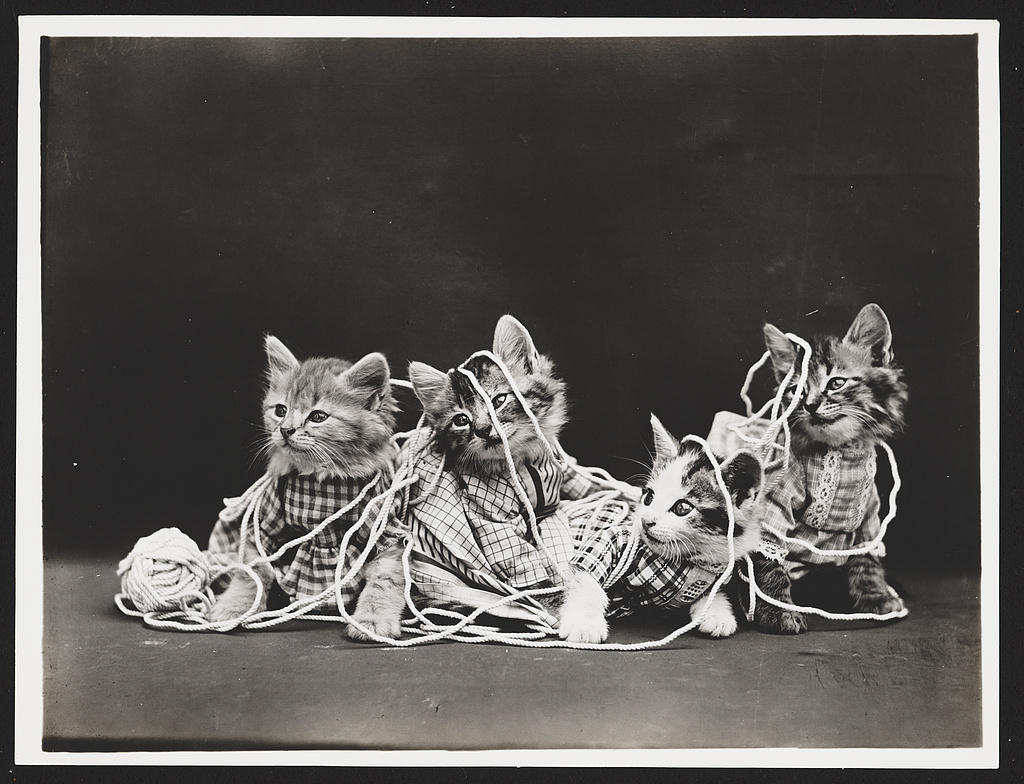 Four kittens entangled in yarn