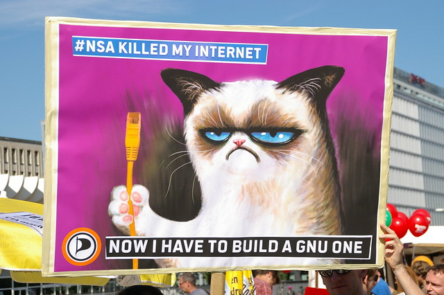 Grumpy Cat holding an ethernet cable