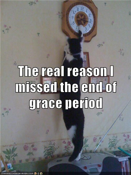 Grace period cat